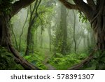 Deep Tropical Jungles Of...