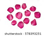 Stock photo pink rose petals on white background 578393251