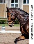 portrait of brown sport horse... | Shutterstock . vector #578444605
