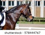 portrait of brown sport horse... | Shutterstock . vector #578444767