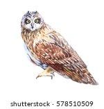 Watercolor Owl Bird  Isolated...