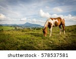 view of a horse on a meadow in... | Shutterstock . vector #578537581