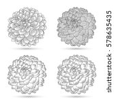set of hand drawn flowers... | Shutterstock .eps vector #578635435