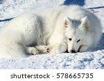 beautiful white samoyed lying... | Shutterstock . vector #578665735