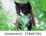 Stock photo cute little kitten in the grass 578687281