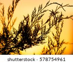 tree branch at sunset   Shutterstock . vector #578754961