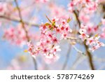 soft and blurred focus... | Shutterstock . vector #578774269