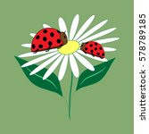 Ladybird Isolated. Illustratio...