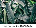 tropical leaves | Shutterstock . vector #578807494