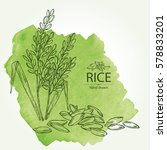 background with rice. hand drawn   Shutterstock .eps vector #578833201
