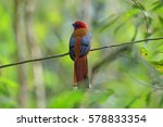 beautiful male of red headed... | Shutterstock . vector #578833354