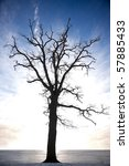 silhouette of bare tree against blue sky - stock photo