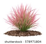 Ornamental Grass Plant Isolated ...