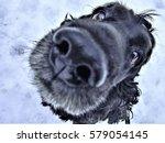 Cocker Spaniel The Dog