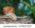 Slug Crawling On A Wooden Stump