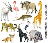African Animals Watercolor...