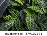 green leaf background   Shutterstock . vector #579102991