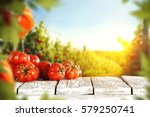 tomatoes and summer day  | Shutterstock . vector #579250741