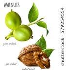 walnuts green  ripe walnut and... | Shutterstock .eps vector #579254554