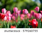 close up flowers background.... | Shutterstock . vector #579260755