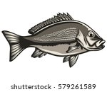red snapper with rods and ocean ... | Shutterstock .eps vector #579261589