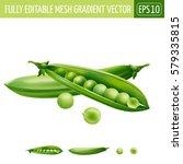 green peas on white background. ... | Shutterstock .eps vector #579335815