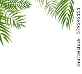 beautifil palm tree leaf ... | Shutterstock .eps vector #579342151