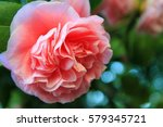 Beautiful  Delicate Blossom Of...