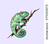 chameleon on a branch colored... | Shutterstock .eps vector #579355075