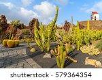 Tropical Cacti Gardens In...