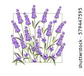 elegant card with lavender... | Shutterstock .eps vector #579447595