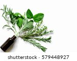 mint  sage  rosemary  thyme  ... | Shutterstock . vector #579448927