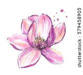 magnolia flower  isolated ... | Shutterstock . vector #579458905