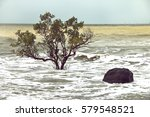 Beach Erosion  Trees In The...