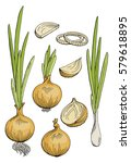 onion graphic color isolated...