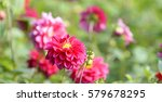 Beautiful Garish Flower In...
