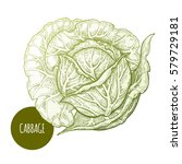 cabbage. hand drawing... | Shutterstock .eps vector #579729181