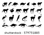 large set of silhouettes of... | Shutterstock .eps vector #579751885