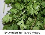 coriander  also known as