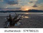 stump of dead mangrove tree at... | Shutterstock . vector #579780121