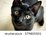 Stock photo black cat 579805501