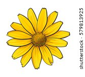 Open Heliopsis Blossom  Top...