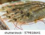 pacific white shrimp export... | Shutterstock . vector #579818641