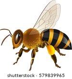 realistic honey bee vector... | Shutterstock .eps vector #579839965