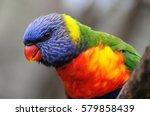 rainbow lorikeet  trichoglossus ... | Shutterstock . vector #579858439