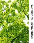 leaves of fresh green. leaves... | Shutterstock . vector #579881395