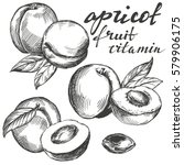 Apricot Fruit Set Hand Drawn...