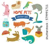 vector set of home pets with... | Shutterstock .eps vector #579991711