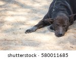 Black Dog Sleeping On Sand...