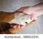 Dog Paws And Human Hand Close...